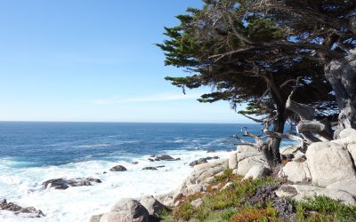 Day 10 : Monterey & Carmel by bike